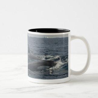 killer whale Two-Tone coffee mug