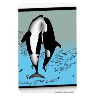 Killer Whales Breaching Magnet #2