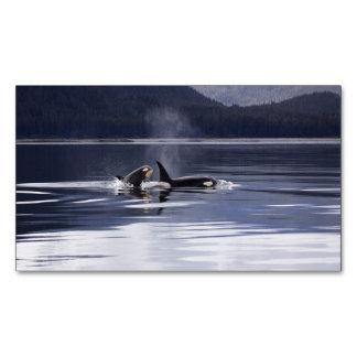 Killer Whales Business Card Magnet
