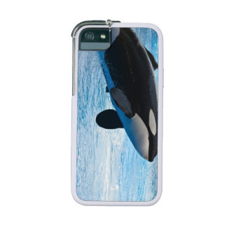 Killer Whales iPhone 5/5S Covers