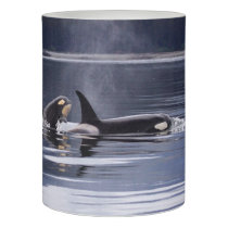 Killer Whales Flameless Candle