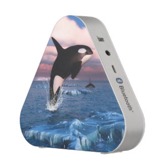 Killer Whales In The Arctic Ocean Speaker