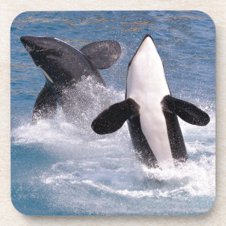 Killer whales jumping out of water beverage coaster