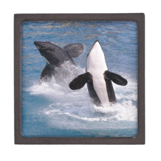Killer whales jumping out of water jewelry box