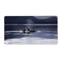 Killer Whales Label