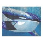 Killer Whales Letterhead