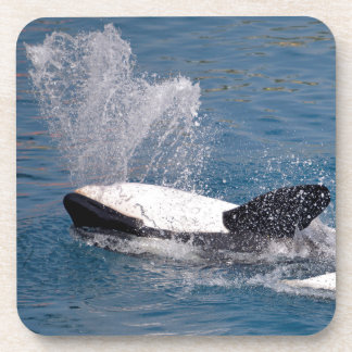 Killer whales on the back coaster