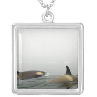 killer whales (orcas), Orcinus orca, pod 2 Silver Plated Necklace