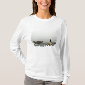 killer whales (orcas), Orcinus orca, pod 2 T-Shirt