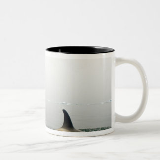 killer whales (orcas), Orcinus orca, pod 2 Two-Tone Coffee Mug