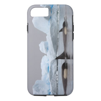 killer whales (orcas), Orcinus orca, pod iPhone 7 Case