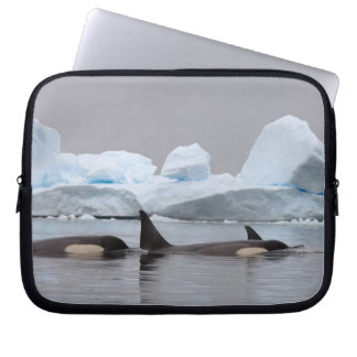 killer whales (orcas), Orcinus orca, pod Laptop Computer Sleeves