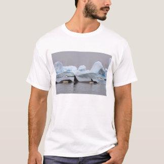 killer whales (orcas), Orcinus orca, pod T-Shirt