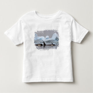 killer whales (orcas), Orcinus orca, pod Toddler T-shirt