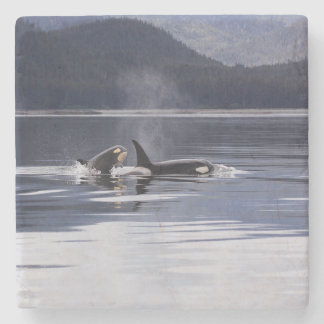 Killer Whales Stone Coaster