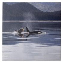 Killer Whales Tile
