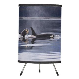 Killer Whales Tripod Lamp