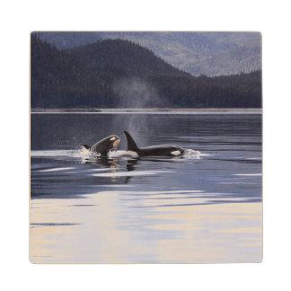 Killer Whales Wooden Coaster