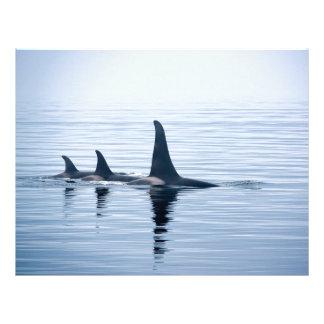 Killerwhale de la isla de Vancouver Membrete A Diseño