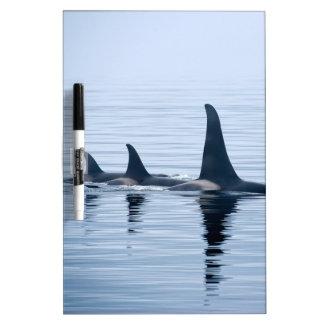 Killerwhale de la isla de Vancouver Pizarras