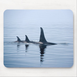 Killerwhale de la isla de Vancouver Mousepads