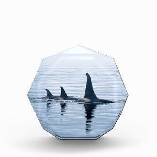 Killerwhale of Vancouver Island Awards