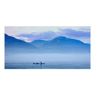killerwhale of Vancouver Island Poster