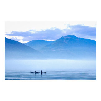 killerwhale of Vancouver Island Customized Stationery
