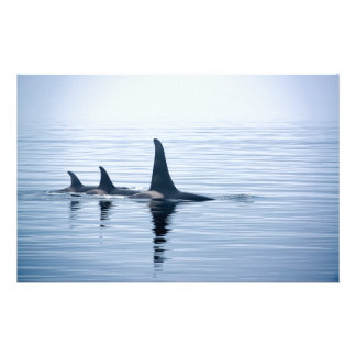 Killerwhale of Vancouver Island Personalized Stationery