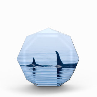 killerwhale or Orca of Vancouver Island Awards