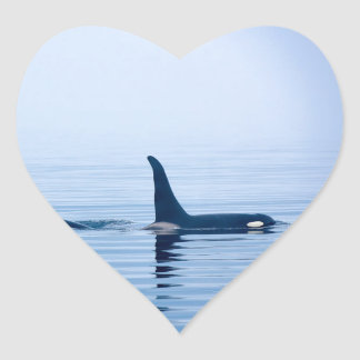 killerwhale or Orca of Vancouver Island Heart Sticker