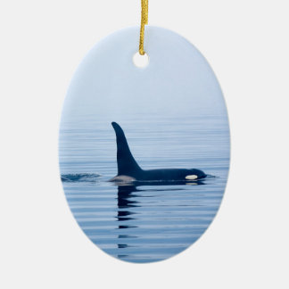 killerwhale or Orca of Vancouver Island Ornament