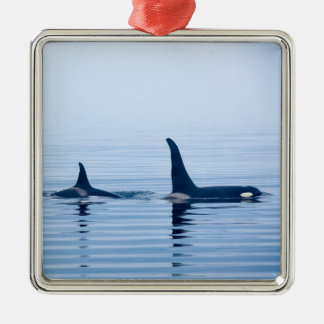 killerwhale or Orca of Vancouver Island Christmas Ornament