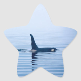 killerwhale or Orca of Vancouver Island Star Sticker