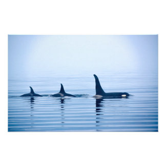 killerwhale or Orca of Vancouver Island Customized Stationery