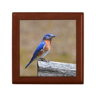 Killingworth Bluebird Jewelry Box