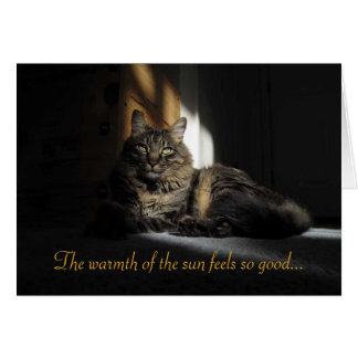 Kimber Cat Slivers of Sunlight Miss You Card