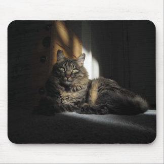 Kimber Cat Slivers of Sunlight Mousepad