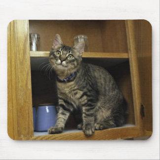 Kimber en el cojín de ratón del armario alfombrillas de raton