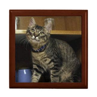 Kimber in the Cupboard Jewelry Box