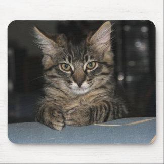 "Kimber Kitty's ""Oh Really?"" Mouspad Mouse Pad"