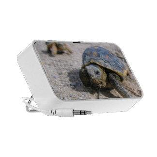 Kimberly P-Chadwick ~ Desert Tortoise Hatchlings Mini Speaker