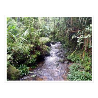 kinabalu creek postcard