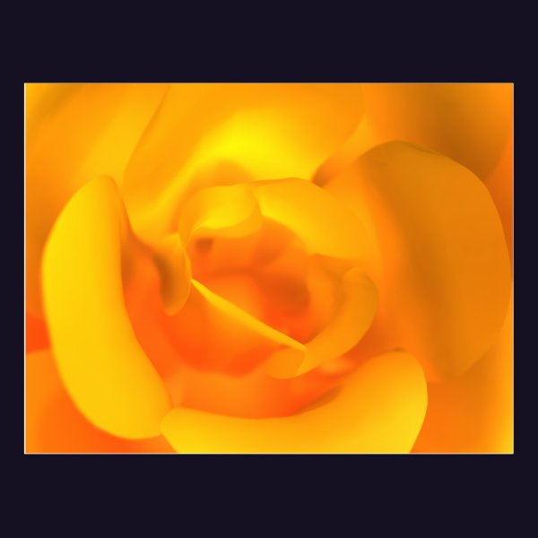 Kindled Rose Postcard