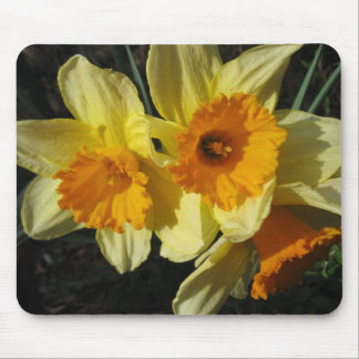 King Alfred Jonquils IMG_0541 Mouse Pad
