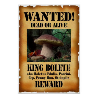 King Bolete - Wanted Dead or Alive Poster