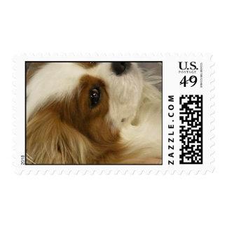 King Charles Cavalier Cocker Spaniel Stamp