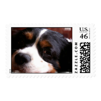 King Charles Cavalier Spaniel Postage Stamp