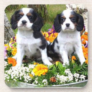 King Charles Spaniel puppies Beverage Coaster