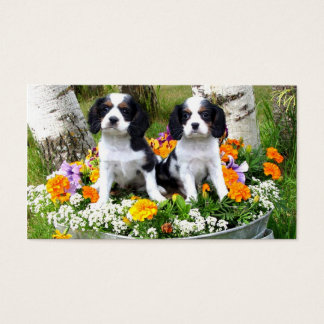 King Charles Spaniel puppies Business Card
